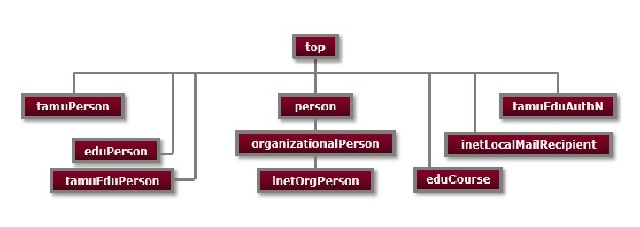 Texas A&M University People Branch Object Class Hierarchy